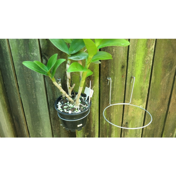 two wire hooks and one orchid in a black pot on wooden fence